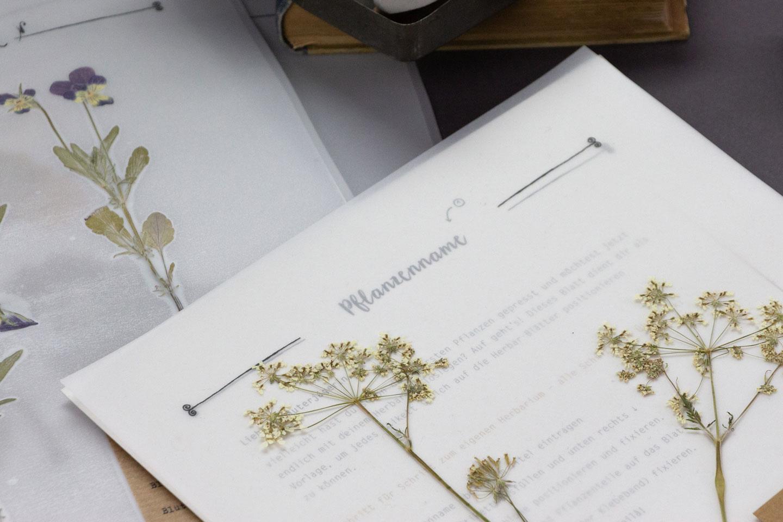 Herbarium Vorlagen –– Finde die richtige Vorlage für dein Herbarium-Projekt. Nutze unsere Herbarium Vorlagen und erstelle dein eigenes Herbarium.