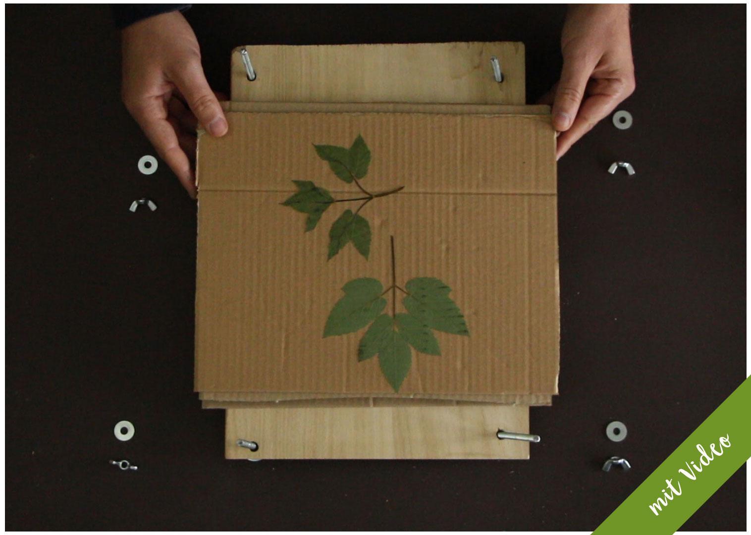 Dein eigenes Herbarium anlegen – Liste mit den wichtigsten Werkzeugen und Materialien für dein eigenes Herbarium. www.herbarium-vorlagen.de –Herbarium Pflanzenpresse selber bauen – Anleitung